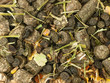 Diet muesli  with herbs background for horse. macro
