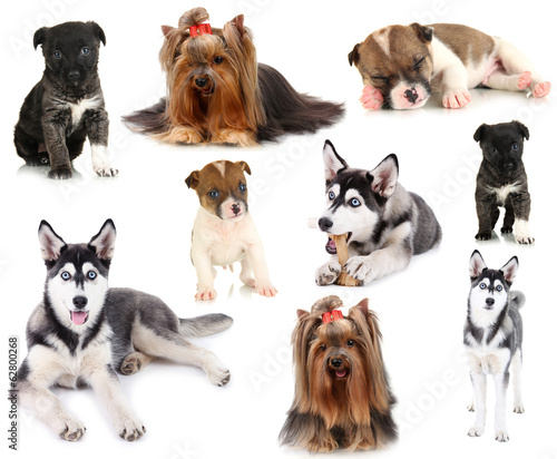 Collage of different dogs isolated on white