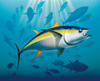 Shoal of yellowfin tuna