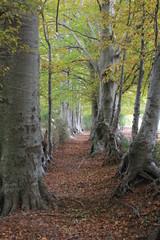 Il bosco 2