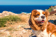 canvas print picture - Hund am Meer (Spanien)