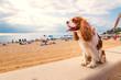 canvas print picture - Strandurlaub mit Hund