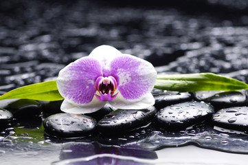 Set of orchid and black stones with palm leaf