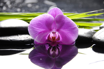 Pink orchid with zen stones and green leaves on black background