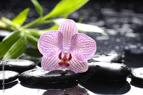 rozowa-orchidea-z-kamieniami-i-bambusowym-lisciem-mokrym-tlem