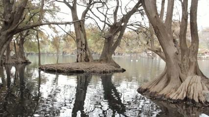 Arboles en el estanque