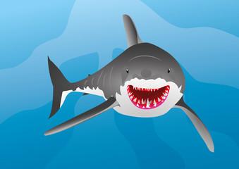 shark fish in marine life
