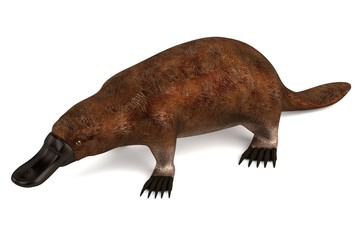 realistic 3d render of platypus