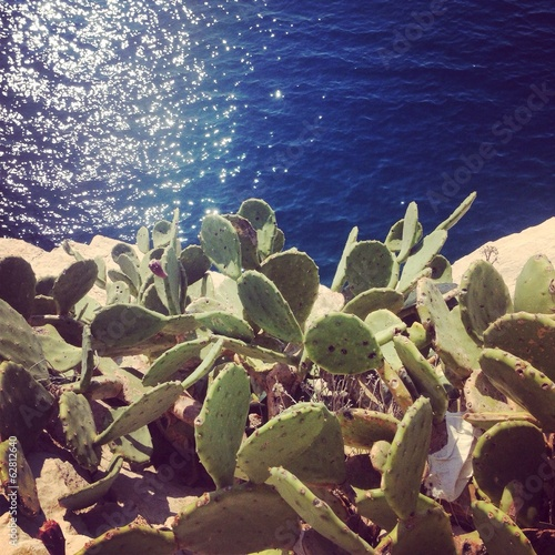 Cactus near the blue sea
