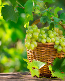 Fototapety Bunch of white grapes in basket