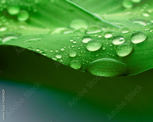 canvas print picture Waterdrops