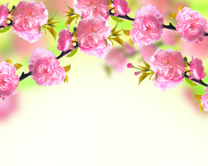 Pink sakura blossom, spring background