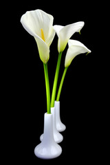 Calla lilies in white vases on black background