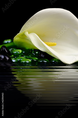 Beautiful white Calla lily reflected in water