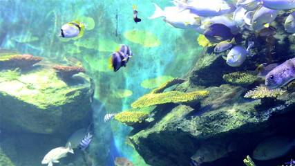 Tropical fishes in big fishtank.