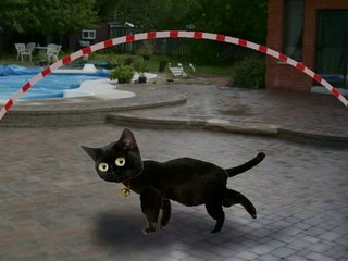 Black cat jumping rope