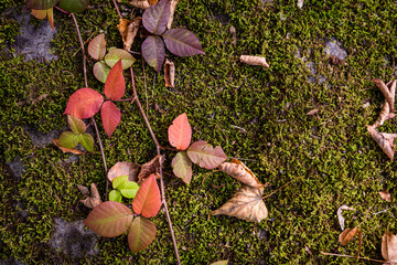 Red leaves and moss