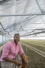 A commercial greenhouse in a plant nursery growing organic flowers. A man holding a digital tablet.