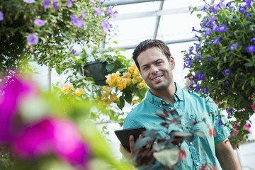 A commercial greenhouse in a plant nursery growing organic flowers. Man working, using a digital tablet.