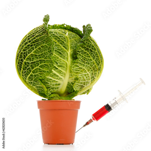 A syringe on a GMO, trangenic, cabbage, vegetable.