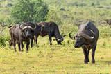 Tansania-11530