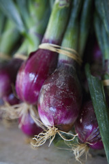 A bunch of freshly harvested onions tied up in bunches. Bulbs.