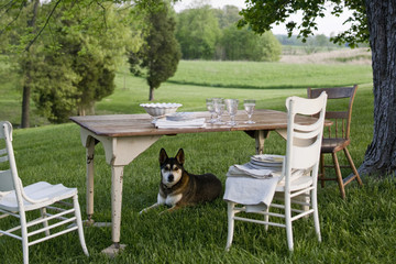 A table laid in a garden, with white china crockery and cutlery. A dog on guard under the table