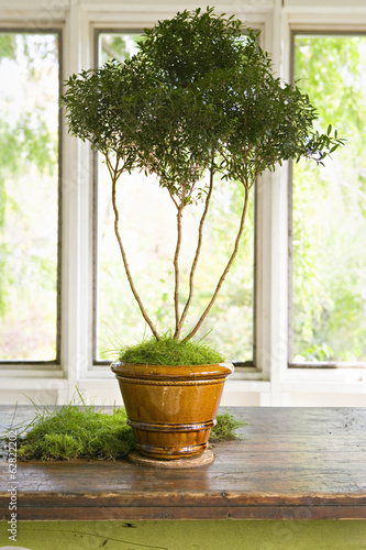 A plant in a small terracotta pot with long bare stems and lush green foliage at the top.