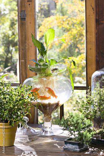 Goldfish in a bowl on a windowsill, with plants growing in the water, with roots visible through the glass.