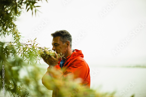 A man in a red jacket breathing in the aroma of  fragrant yellow flowers of a shrub.