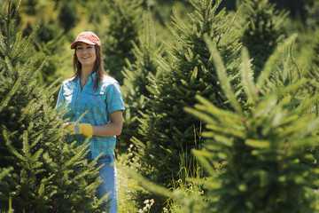 A field full of conifers, pine trees, being tended and pruned by a young woman.