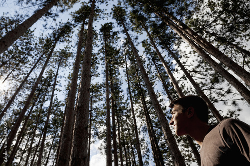 A young man looking up into the pine forest tree tops.