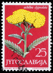 Stamp Yugoslavia shows Moonshine Yarrow, circa 1958