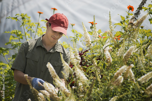 Organic Farmer, young man tending flowering shrubs in a polytunnel.