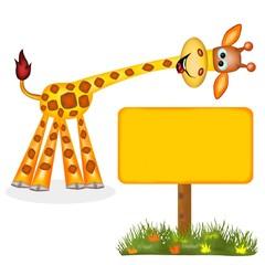 giraffa spot
