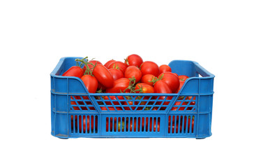 Red tomatoes in a plastic blue box isolated