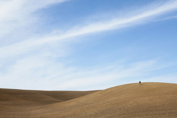 A person standing on a ridge, of ploughed soil and rolling downland.