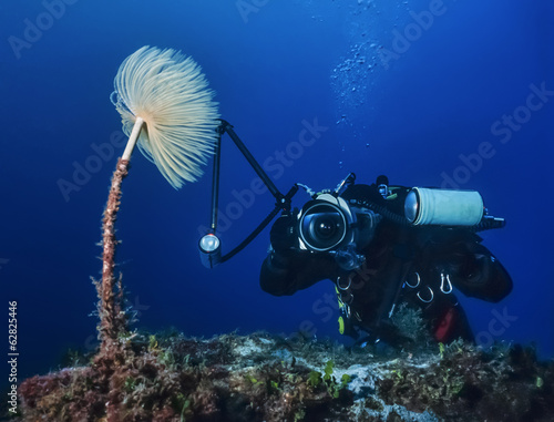 Italy, Tyrrhenian sea, U.W. photo,  underwater photographer