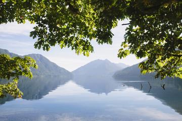 Big Leaf maple tree framing Lake Crescent in Calallam County, Washington, USA