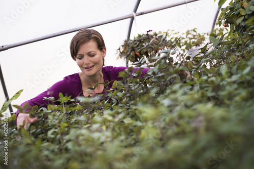 A woman working on trays of leafy plants in an organic garden.