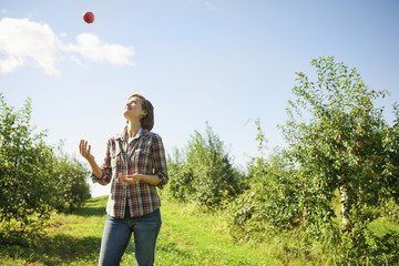 A woman in a plaid shirt juggling picked apples in the orchard at an organic fruit farm.