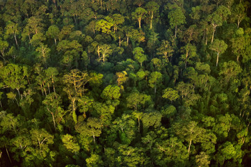Lowland rainforest aerial, Borneo