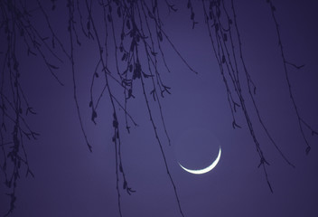 A new moon in a purple sky, with weeping willow branches. The Netherlands