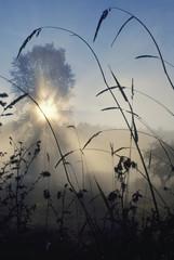 Sun burning through morning fog, Orcas Island, Washington