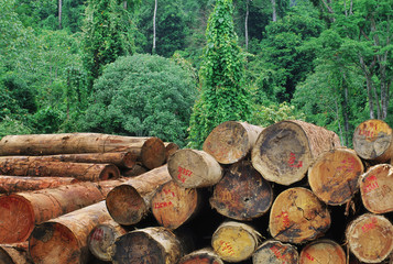 Logging in lowland rainforest in Sabah, Borneo