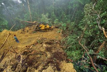 Bulldozer grading logging road in rainforest, Sabah, Borneo