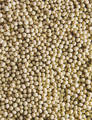 Soybeans, small round beans, one of the most popular and healthy legumes.