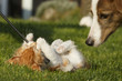 Spielendes Kätzchen und Hund