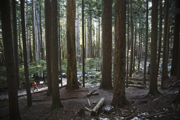 A man walking up a trail surrounded by tall trees in a thick forest near North Bend, Washington.