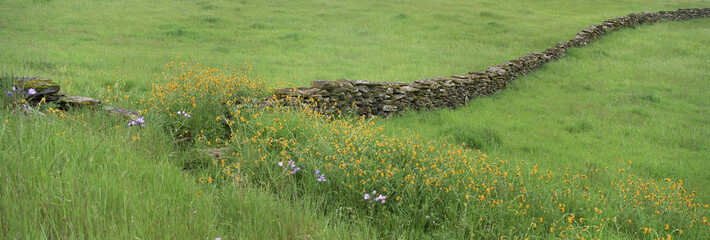 Meadow with stone wall and wildflowers.